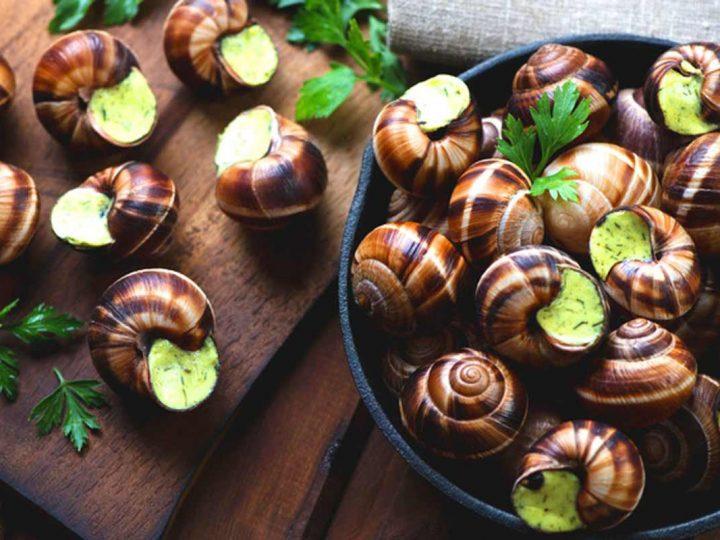 Tham quan trang trại nuôi ốc sên, từ chế biến thành món ăn cho đến mỹ phẩm